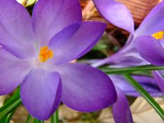love purple, green and orange together   Photo by Laura Zimzores
