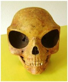 Ancient Alien Skull Photos RELEASED, Carbon dated at 1200 AD. #ufosighting | Alienagenda's Blog Unexplained Mysteries, Ancient Mysteries, Ancient Artifacts, Aliens And Ufos, Ancient Aliens, Ancient History, Alien Theories, Alien Skull, Human Skull