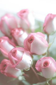 Pink Edged White Roses
