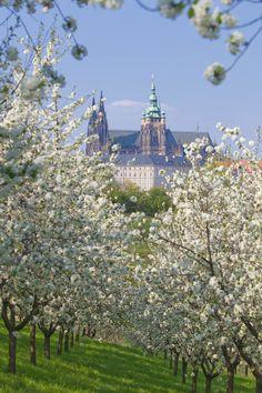 Prague Castle in the springtime