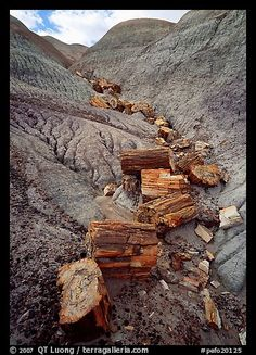 Petrified Forest National Park, Colorado. I saw this in one of the Dakotas (forgot which). What happens is quartz and other minerals got trapped in the wood and preserved parts of the trees, resulting in wood that feels like a rock.