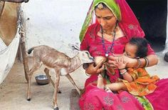 Indian woman breastfeeding child & goat ( before you judge, remember that there are places in the world where you and your child's life depend on the survival of your live stock)