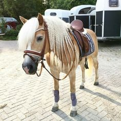The most important role of equestrian clothing is for security Although horses can be trained they can be unforeseeable when provoked. Riders are susceptible while riding and handling horses, espec… Trail Riding Horses, Horse Riding, Cute Horses, Pretty Horses, Most Beautiful Horses, Animals Beautiful, Arte Equina, Ranch Riding, Haflinger Horse