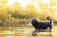 Bath time #yummypets #dog