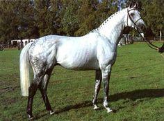 TB stallion Exorbitant xx