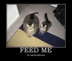 You better feed me…