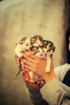 A handful of kittens!