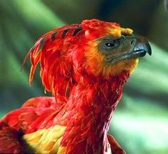 Fawkes - Harry Potter Wiki