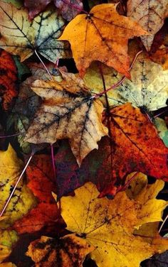 Fall leaves. Aren't they beautiful?