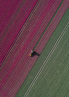 Tulip fields in the Netherlands seen from above. Aerial photography project by Tom Hegen Tulip fields in the Netherlands seen from above. Aerial photography project by Tom Hegen Photography Projects, Aerial Photography, Photography Flowers, Street Photography, Landscape Photography, Portrait Photography, Wedding Photography, Africa Nature, Tulip Fields