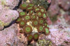 #corals - Can you tell what kind of coral is this?