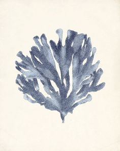 Vintage Sea Kelp Wall Decor Print No. 1 8x10 Ocean Blue