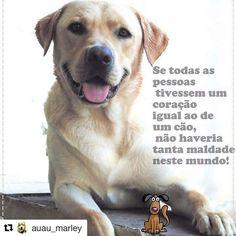 PURA VERDADE!❤ #cachorro #cachorroterapia #cachorroetudodebom #caopanheiro #petshop #petmeupet #amocachorro #amoanimais