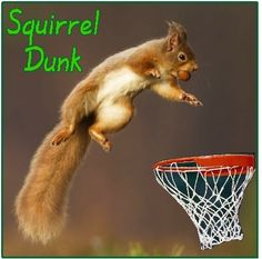 I got this!  Squirrel Dunk Basketball.  #animals #sports #funny