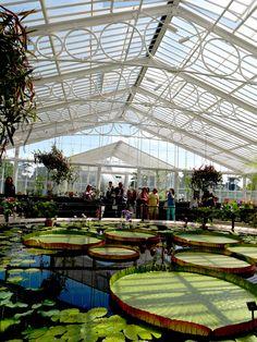 waterlily greenhouse, kew garden, London