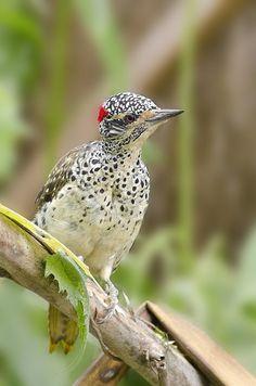 I guess so! Kinds Of Birds, All Birds, Little Birds, Love Birds, Most Beautiful Birds, Pretty Birds, Exotic Birds, Colorful Birds, Beautiful Creatures
