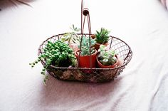 travelling plants. Great idea! Put them in the sun when needed, and back in your home to enjoy :)