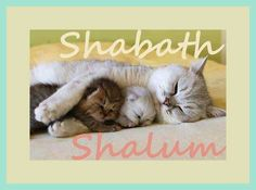 baby animals and their mothers - Yahoo Image Search results I Love You God, God Is Good, Shabbat Shalom, Most Visited, Baby Animals, Bible Verses, Feelings, Cats, Sabbath