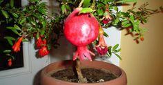 <p>Ha különleges és egzotikus növényre vágysz, akkor kezdésnek a...