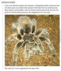 I Always Kinda Liked Spiders, Honestly...