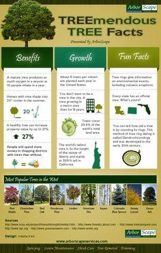 treemendous tree facts