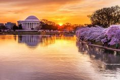 Best Ways to Enjoy the Cherry Blossom Festival in Washington DC: Explore the Tidal Basin and See the Cherry Trees