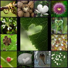 hearts in nature <3