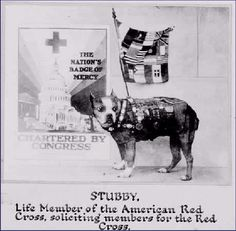 After the war, Stubby was awarded lifetime memberships in the American Legion, YMCA and American Red Cross.