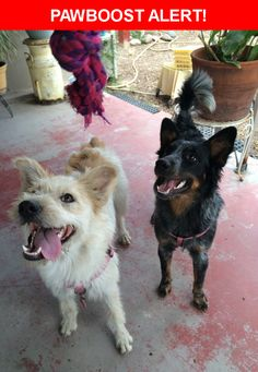 Please spread the word! Bailey & Kalua was last seen in El Paso, TX 79930.  Description: 1 year 9ld not spayed yet  Nearest Address: 3427 Monroe Avenue, El Paso, TX, United States