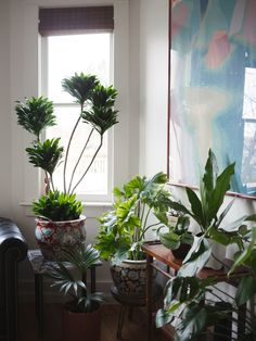 reworking all the plants at home! any advice on why that philodendron (hope? selloum??) in the corner is such a yellow-green color? it's doubled in size but stays this shade we got it before the shop philos and they're definitely darker green