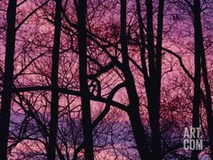 Detail of Bare Trees Silhouetted against a Deep Rose Sky Photographic Print by Mattias Klum at Art.com