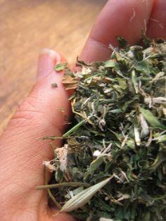 For more info about Adaptogen can visit http://www.immortalitea.com/jiaogulan-tea-gynostemma-pentaphyllum-p-229.html
