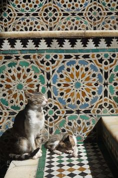 Stray cats in Fez Madina in Morocco Kittens Cutest, Cats And Kittens, Cute Cats, Happy Animals, Cute Animals, Cat Magazine, Kinds Of Cats, Orange Tabby Cats, Cat Drawing