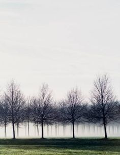 """Saatchi Art Artist Jacob Thue; Tree Photography, """"Morning Mist In Trees - Limited Edition 1 of 30"""" #art"""