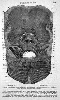 facial muscles internal aspect