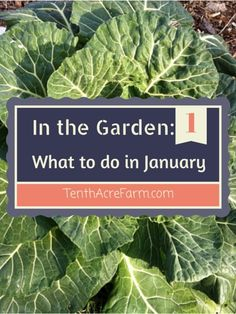 In the Garden: What to do in January