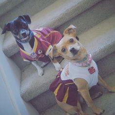 These #Redskins pups look like quite the dynamic duo. #HTTR