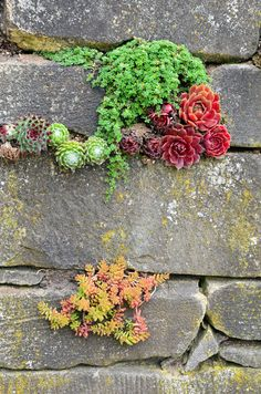 Pretentious Front Yard Rock Garden Landscaping Ideas – Page 30 of 69 Succulent Wall, Planting Flowers, Rock Wall Gardens, Plants, Succulents, Garden Wall, Rock Garden Landscaping, Garden Landscaping, Planting Succulents