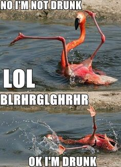 Go home flamingo, you're clearly drunk.