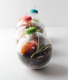 Ornament Terrariums + Giveaway