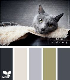 Blue Stare by Design Seeds Colour Pallette, Color Palate, Colour Schemes, Color Patterns, Color Combos, Design Seeds, Color Composition, World Of Color, Color Swatches