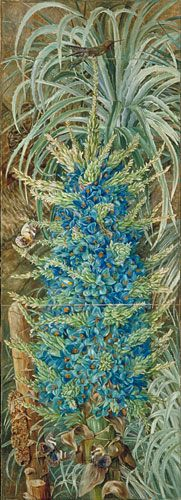 Inflorescence of the Blue Puya and Moths, Chile   Marianne North