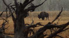 自然のカリスマ、あなたが前に見ることはないような最も驚くべき動物 - 知識パラダイス