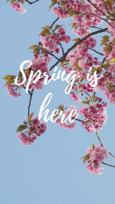 Spring Cherry Blossom iPhone Wallpaper Collection