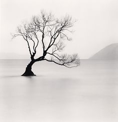 Michael Kenna - Wanaka Lake Tree, Study 1, Otago, New Zealand, 2013 | From a unique collection of black and white photography at http://www.1stdibs.com/art/photography/black-white-photography/