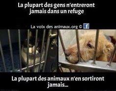 La Voix des animaux: Liste des refuges sans euthanasie au Québec