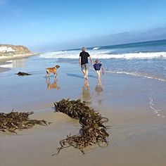 Me, Flip and my niece going for a walk on the #Beach! #Malibu #Summer