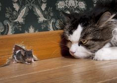 Love this cat-mouse pic :) I Love Cats, Crazy Cats, Cute Cats, Funny Cats, Funny Animals, Cute Animals, Matou, Cat Mouse, Tier Fotos