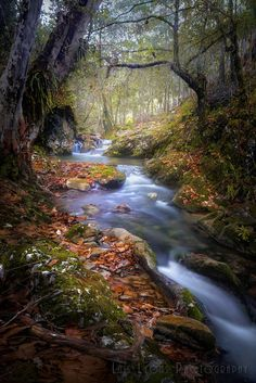 Autum Morning in the Sierra Negra Highlands by Luis Lyons on 500px.... #autumn #yellow #trees #leaves #morning #red #forest #water #river #mexico #light #beautiful #green #highlands #mood #flow #creek #puebla #mexicanforest