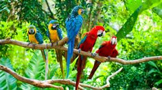 Parrot HD Wide Wallpaper for Widescreen Birds and Flight